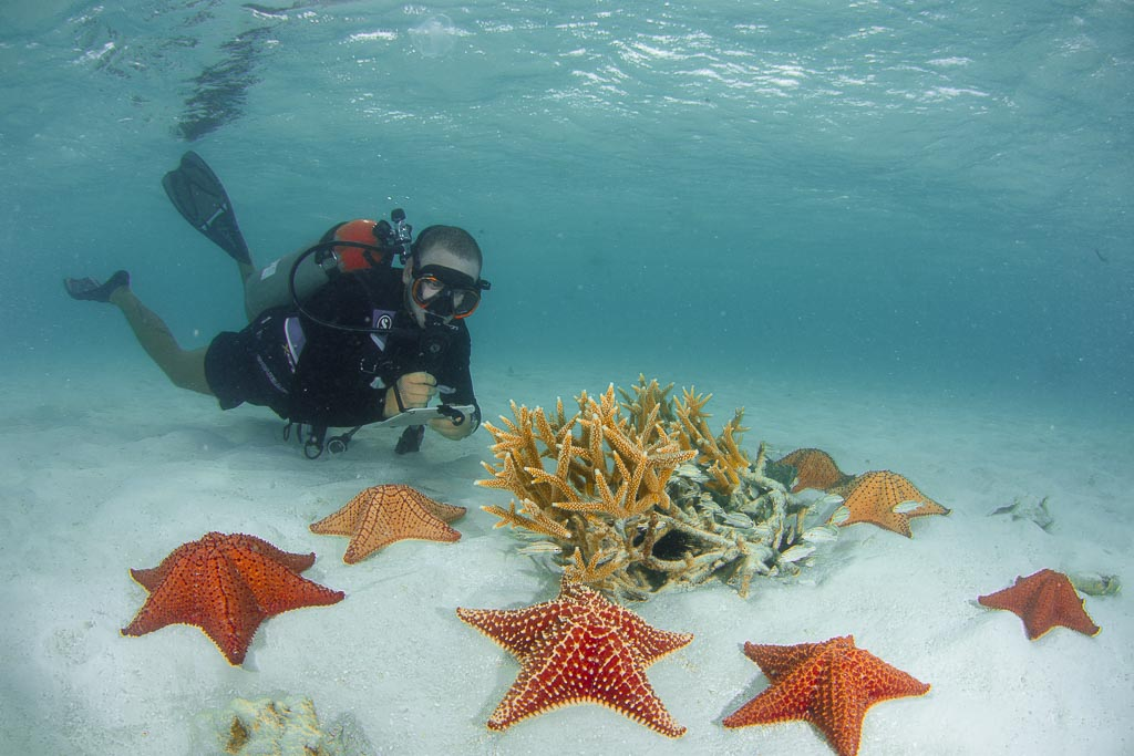 SCUBA DIVING WITH STARFISH