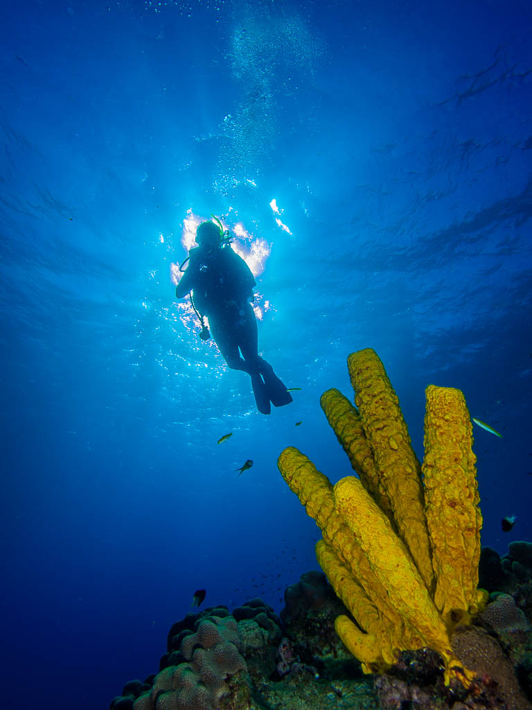 UNDERWATER PHOTOGRAPHY LOS ROQUES