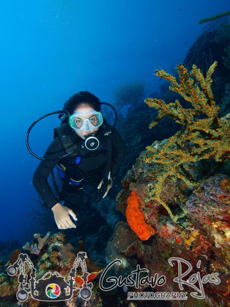 diver in reef ARCHIPELAGO LOS ROQUES